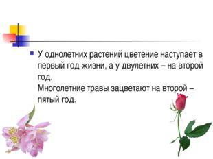 У однолетних растений цветение наступает в первый год жизни, а у двулетних –