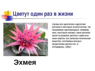 Цветут один раз в жизни (таковы все однолетние и двулетние растения и некотор