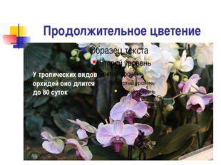 Продолжительное цветение У тропических видов орхидей оно длится до 80 суток