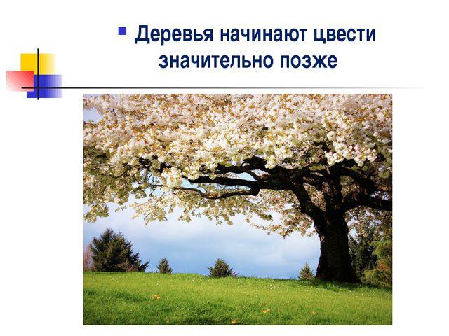 Деревья начинают цвести значительно позже .