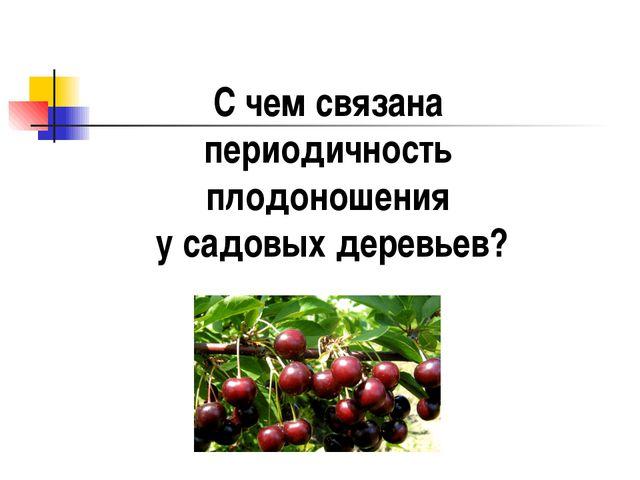 С чем связана периодичность плодоношения у садовых деревьев?