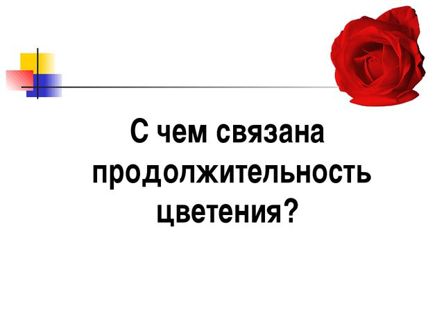 С чем связана продолжительность цветения?