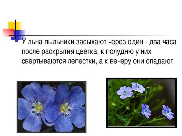 У льна пыльники засыхают через один - два часа после раскрытия цветка, к пол...