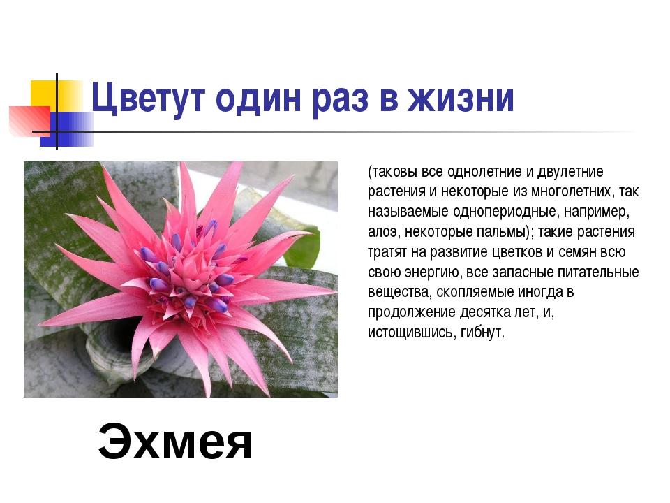 Цветут один раз в жизни (таковы все однолетние и двулетние растения и некотор...