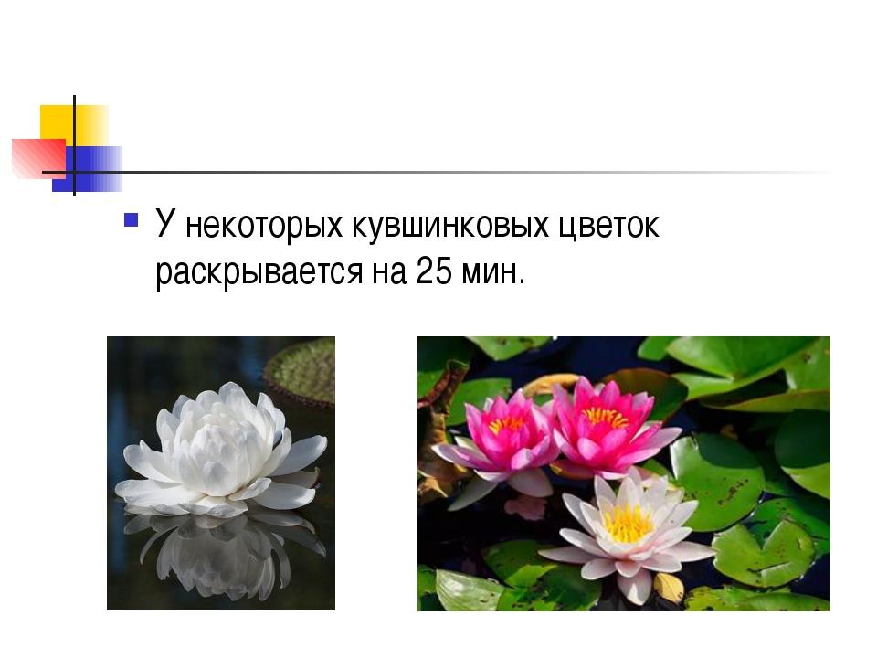 У некоторых кувшинковых цветок раскрывается на 25 мин.