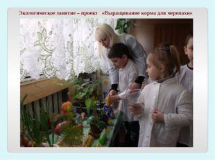 Экологическое занятие – проект «Выращивание корма для черепахи»