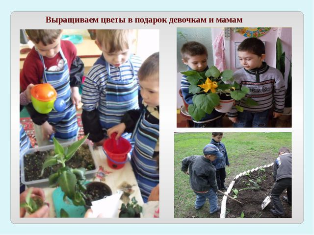 Выращиваем цветы в подарок девочкам и мамам