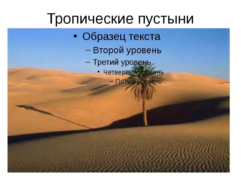 Тропические пустыни