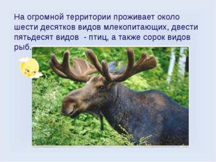 На огромной территории проживает около шести десятков видов млекопитающих, дв