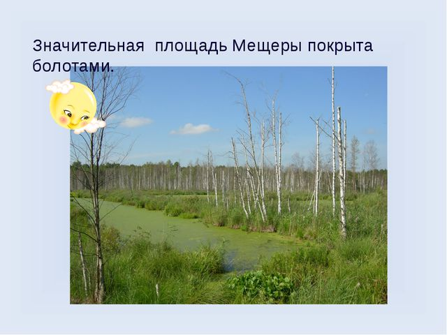 Значительная площадь Мещеры покрыта болотами.