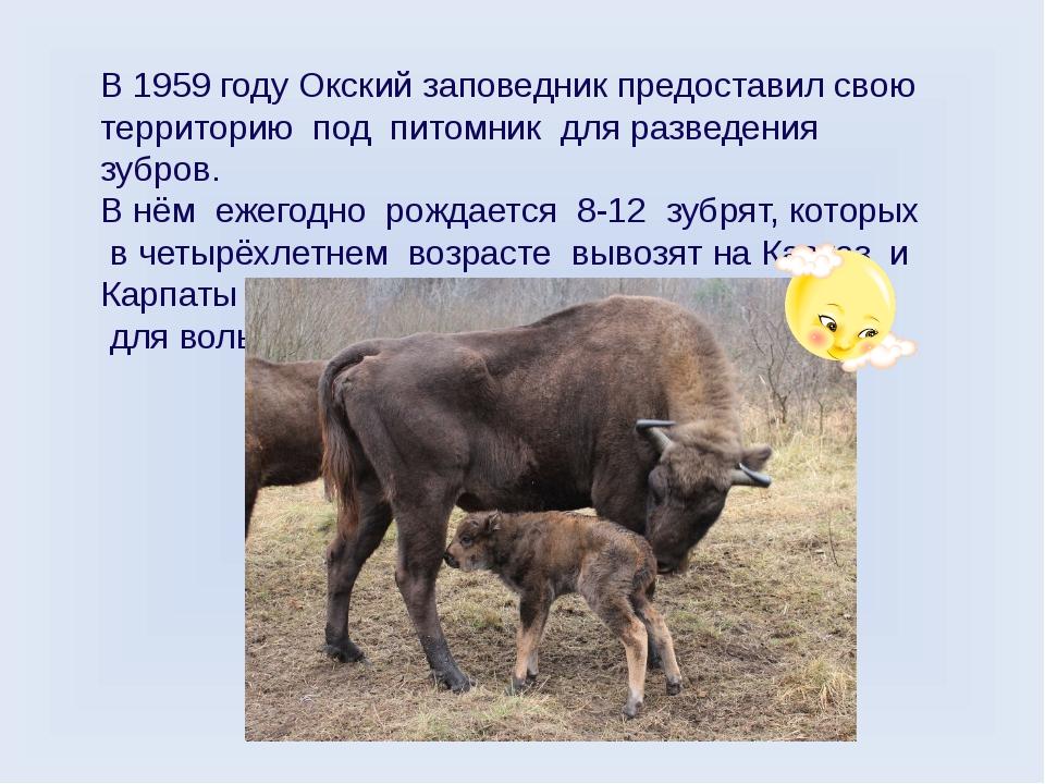В 1959 году Окский заповедник предоставил свою территорию под питомник для ра...