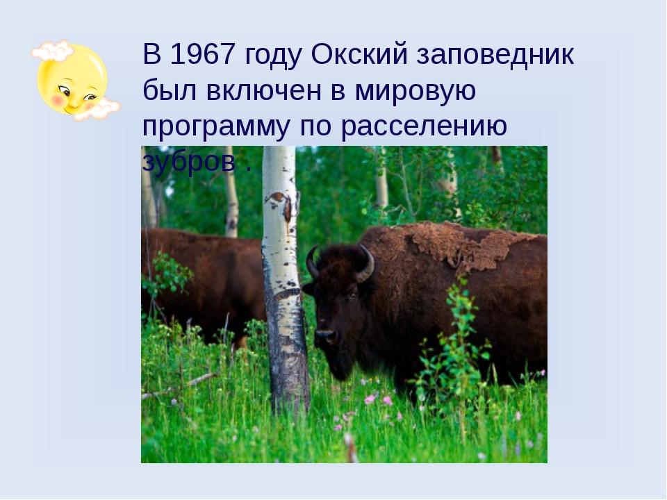 В 1967 году Окский заповедник был включен в мировую программу по расселению з...
