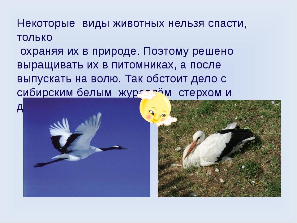 Некоторые виды животных нельзя спасти, только охраняя их в природе. Поэтому р...