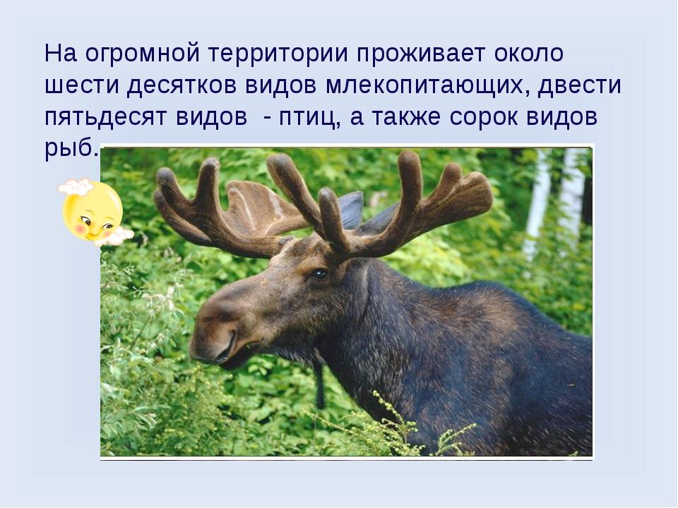 На огромной территории проживает около шести десятков видов млекопитающих, дв...