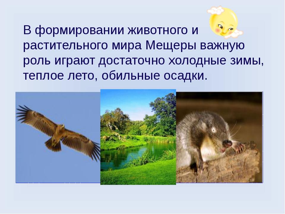 В формировании животного и растительного мира Мещеры важную роль играют доста...