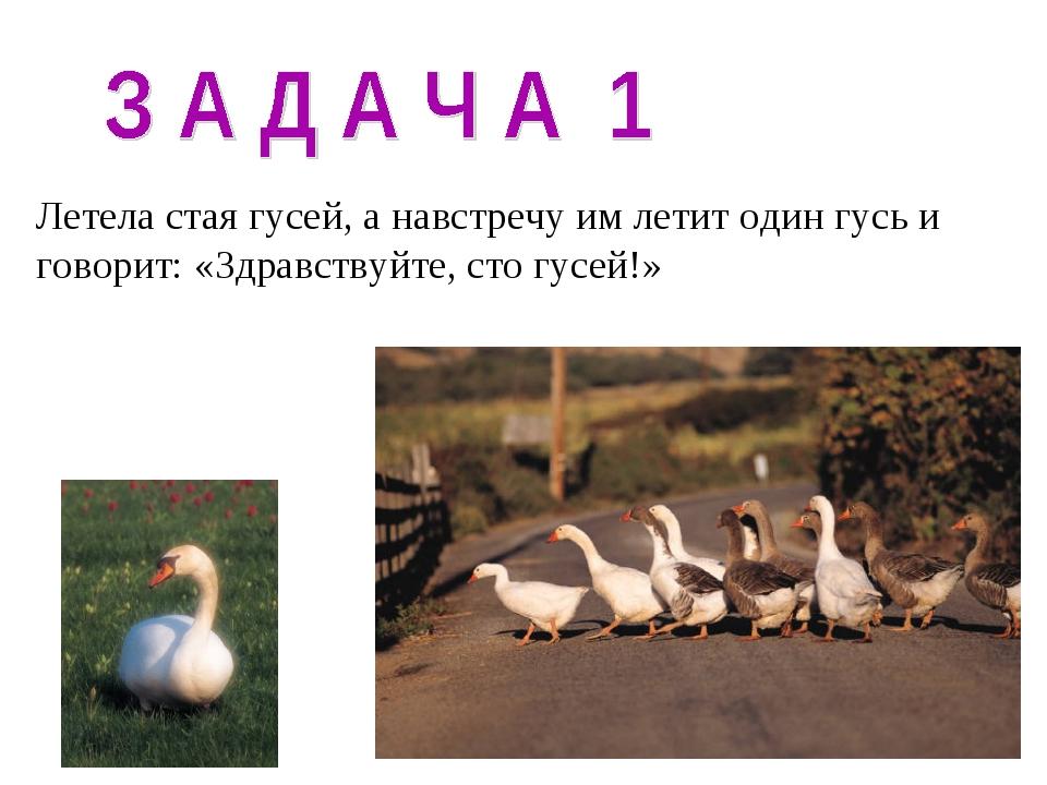 Летела стая гусей, а навстречу им летит один гусь и говорит: «Здравствуйте, с...
