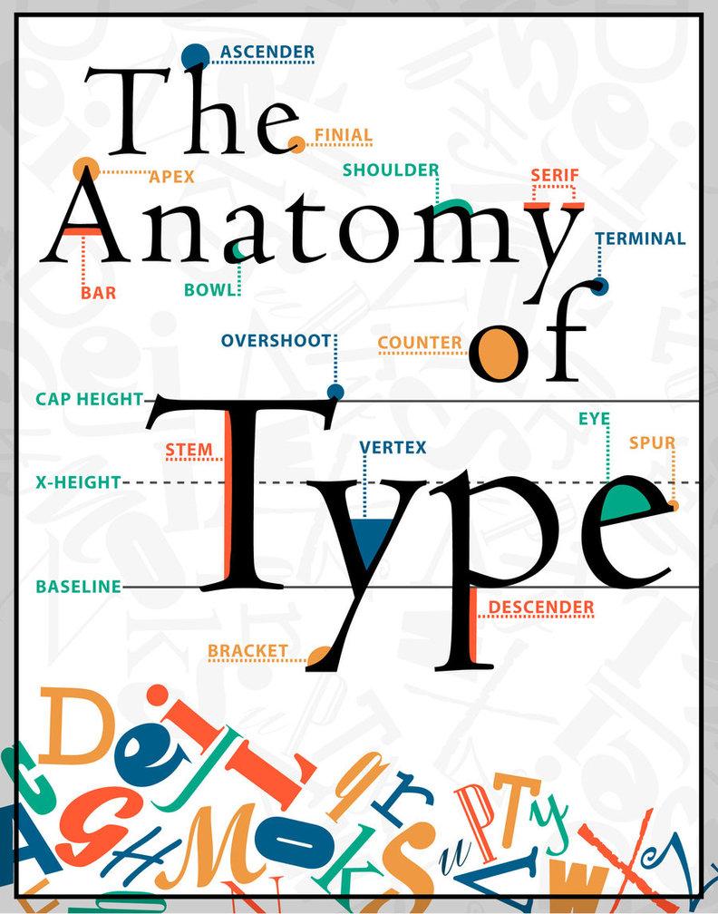 D:\Моеё\Потборка для гос практики в ср. школе\лицей с. Месягутово\3 класс\6 урок(42). Прогулка на почту\картинки\The_Anatomy_of_Type_Poster_by_designstew.jpg