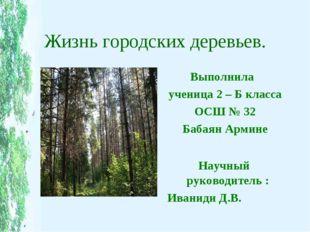 Жизнь городских деревьев. Выполнила ученица 2 – Б класса ОСШ № 32 Бабаян Арми