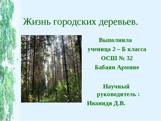 Жизнь городских деревьев. Выполнила ученица 2 – Б класса ОСШ № 32 Бабаян Арми...