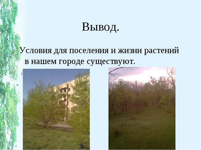 Вывод. Условия для поселения и жизни растений в нашем городе существуют.