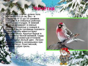 Чечётка Небольшая птичка -длина тела достигает 12-14 см. Вес - в пределах от