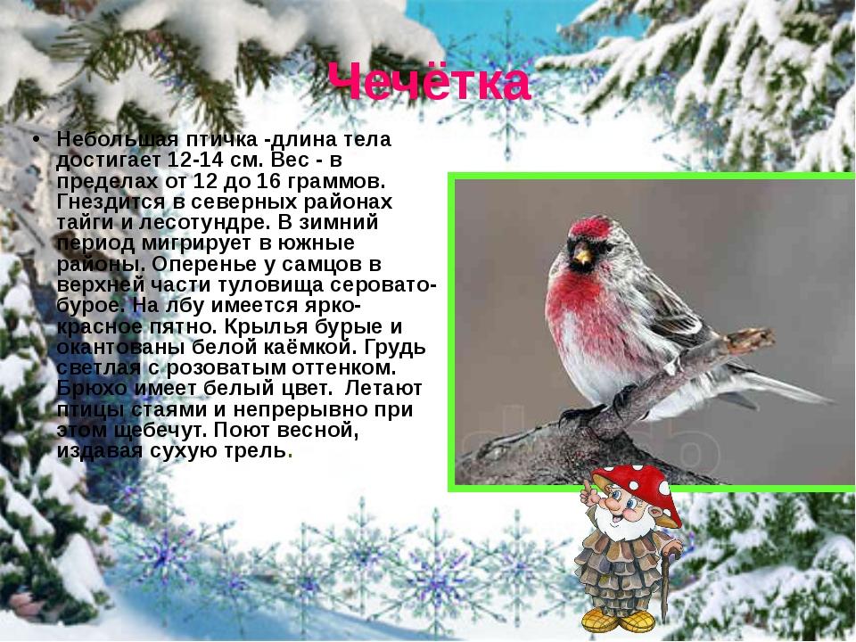 Чечётка Небольшая птичка -длина тела достигает 12-14 см. Вес - в пределах от...