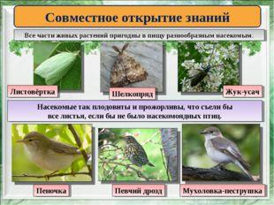 * Совместное открытие знаний Все части живых растений пригодны в пищу разнооб