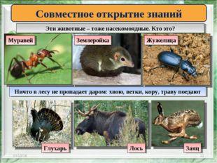 * * Эти животные – тоже насекомоядные. Кто это? Совместное открытие знаний Му