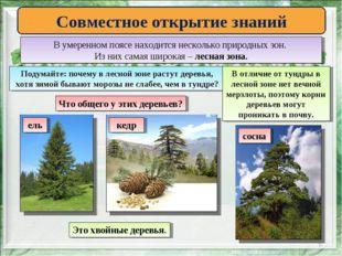 * Совместное открытие знаний В умеренном поясе находится несколько природных