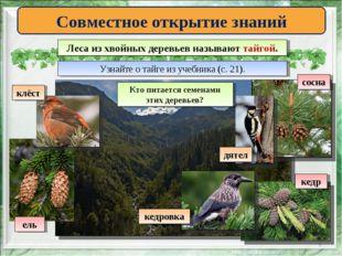* Совместное открытие знаний Леса из хвойных деревьев называют тайгой. Узнайт