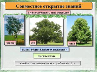 * Совместное открытие знаний В чём особенность этих деревьев? берёза липа дуб