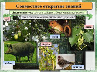 * Совместное открытие знаний Лиственные леса растут в районах с более мягким