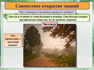 * Совместное открытие знаний Чем отличаются лиственные деревья от хвойных? Ли