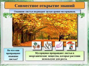 * Совместное открытие знаний Опавшие листья поджидает целая армия мусорщиков.