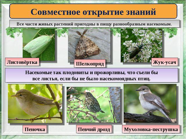 * Совместное открытие знаний Все части живых растений пригодны в пищу разнооб...