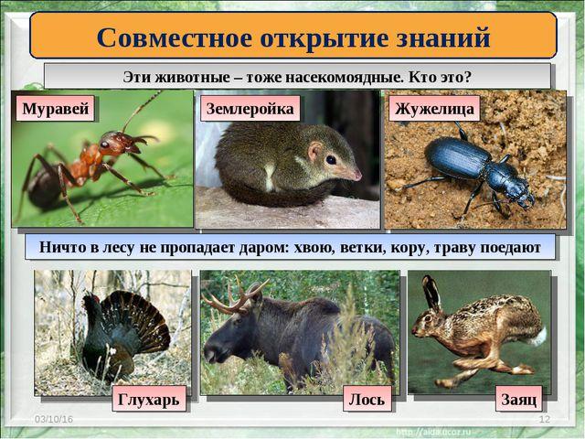 * * Эти животные – тоже насекомоядные. Кто это? Совместное открытие знаний Му...