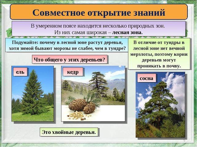 * Совместное открытие знаний В умеренном поясе находится несколько природных...