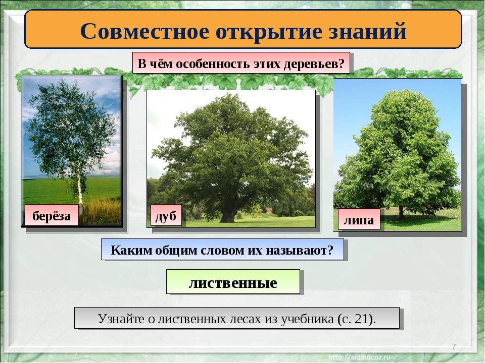 * Совместное открытие знаний В чём особенность этих деревьев? берёза липа дуб...