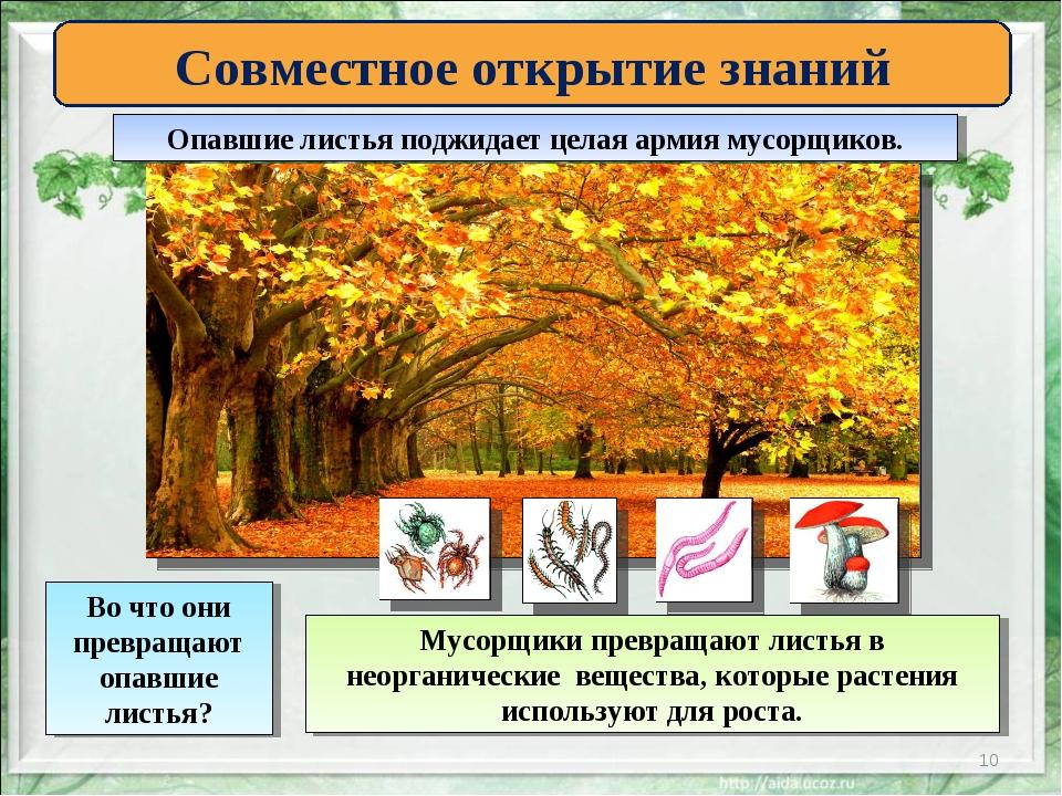 * Совместное открытие знаний Опавшие листья поджидает целая армия мусорщиков....
