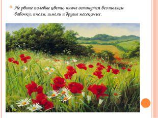 Не рвите полевые цветы, иначе останутся без пыльцы бабочки, пчелы, шмели и др