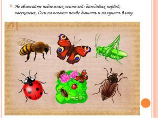 Не обижайте подземных жителей: дождевых червей, насекомых. Они помогают почве