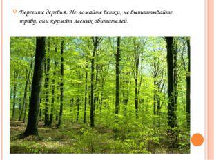 Берегите деревья. Не ломайте ветки, не вытаптывайте траву, они кормят лесных