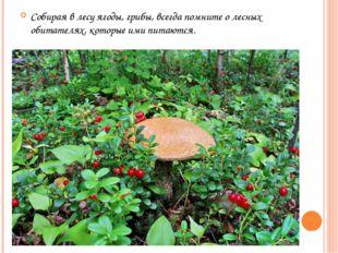 Собирая в лесу ягоды, грибы, всегда помните о лесных обитателях, которые ими