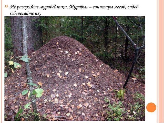 Не разоряйте муравейники. Муравьи – санитары лесов, садов. Оберегайте их.