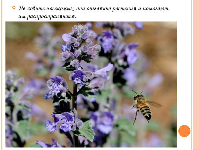 Не ловите насекомых, они опыляют растения и помогают им распространяться.