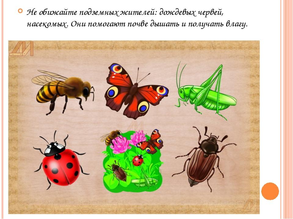 Не обижайте подземных жителей: дождевых червей, насекомых. Они помогают почве...