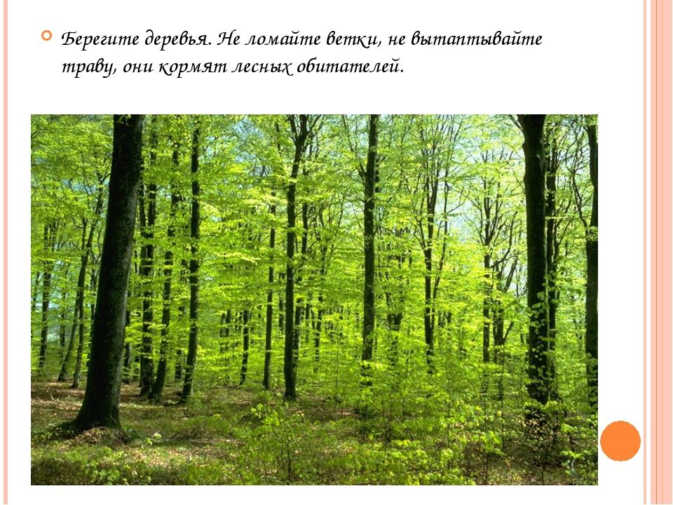 Берегите деревья. Не ломайте ветки, не вытаптывайте траву, они кормят лесных...