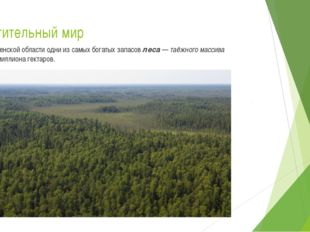 Растительный мир В Тюменской области одни из самых богатых запасов леса — таё