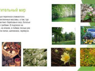 Растительный мир Берёзовые перелески сливаются в хвойно-лиственные массивы, а