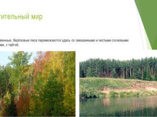 Растительный мир Лиственные, берёзовые леса перемежаются здесь со смешанными